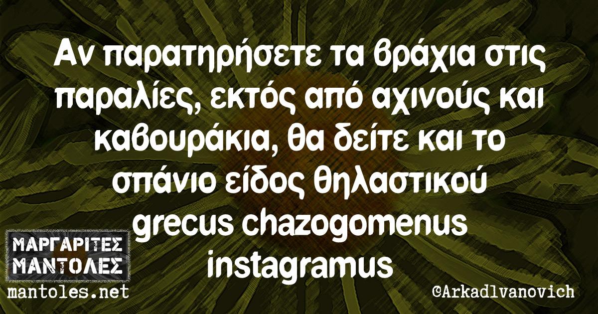 Αν παρατηρήσετε τα βράχια στις παραλίες, εκτός από αχινούς και καβουράκια, θα δείτε και το σπάνιο είδος θηλαστικού grecus chazogomenus instagramus